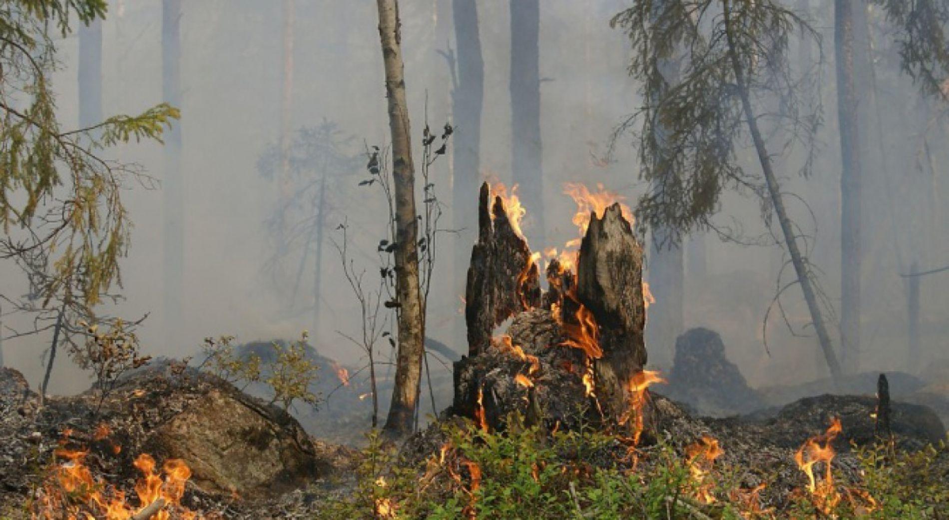 Пожарите в област Сливен са контролирани